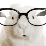 Glasses-Rabbit